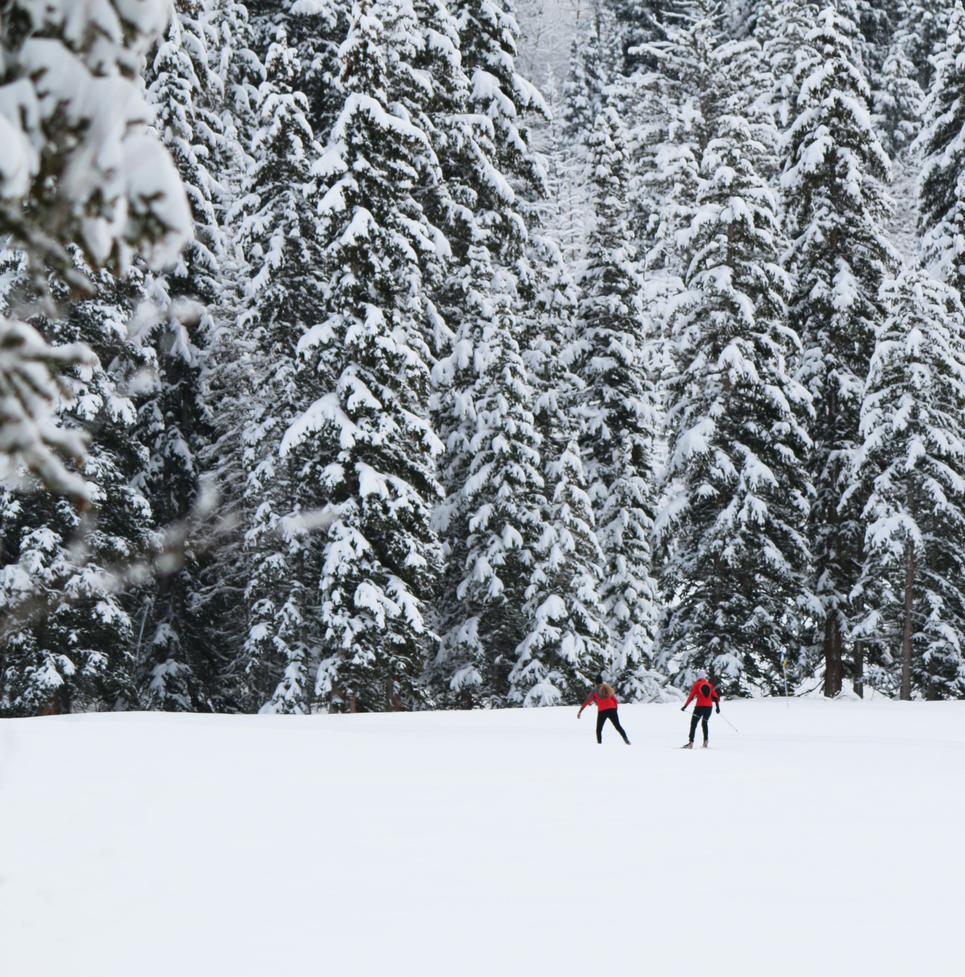 Two people skiing near woods