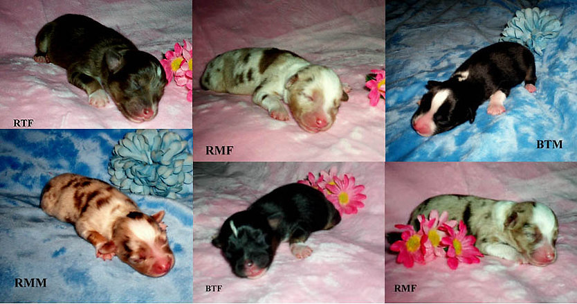 puppies1020.jpg