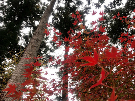 山の秋も深まってきました