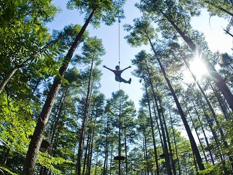 キャンプと一緒に森のアクティビティはいかがでしょうか?