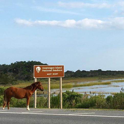 Pony & Sign