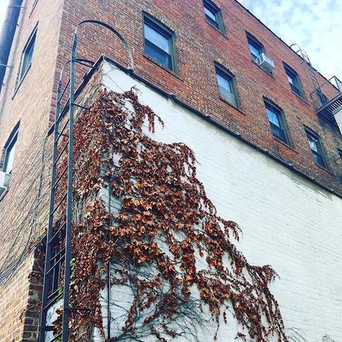 Larchmont, NY
