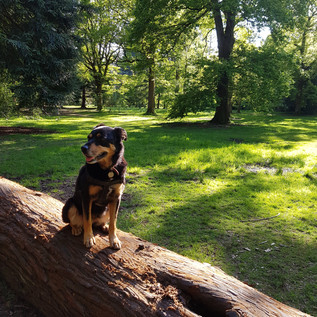 Tess in Forest of Dean