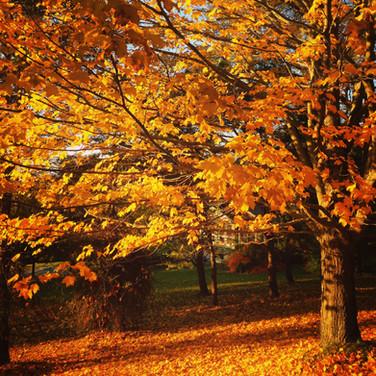 Berkshire Fall
