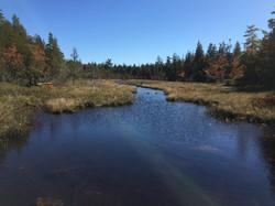 stream, Acadia National Park