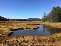 marsh on Mount Desert Island