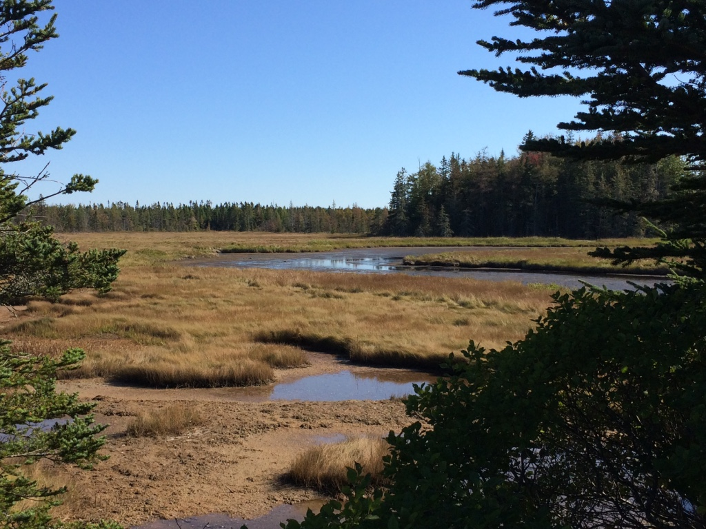 marsh on Mount Desert Island