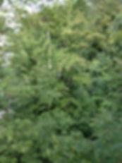 Baumpflege Basel, Baumpflege Liestal. Baumpflege am Waldrand von Winterthur. Auf der Suche nach dem ALB Käfer für die Stadtgärtnerei Winterthur. Ihr Spezialist für Bäume, Baumpflege, Fällarbeiten, Pflanzungen und Gartenpflege. Im Raum Basel, Riehen, Binningen, Arlesheim, Liestal und den beiden Frenkentälern.