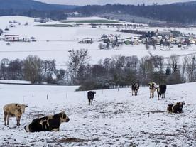 Unsere Rinder in Fulda V wünschen Euch ein schönes Wochenende ❤️