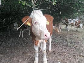 Endlich ein echtes Leben - Unsere Rinder in Bingen ❤️