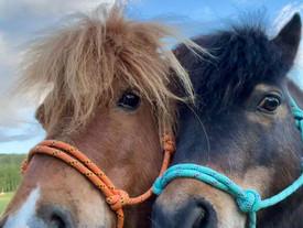Und los geht´s, eine Runde spazieren gehen mit unseren Ponys ❤️