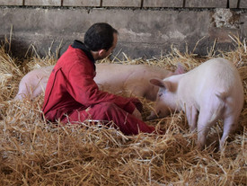 Bitte bleibt den Tieren auch in dieser Zeit treu ❤️