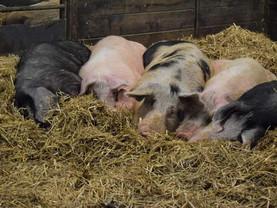 Unsere Schweine in Augsburg wünschen Euch einen GUTEN MORGEN ❤️