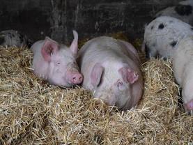 HAPPY NEW YEAR - Unsere Schweine, ein Rückblick ❤️