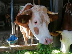 Kuh (202) braucht dringend Hilfe! ❤️