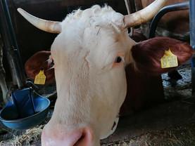 Kuh (005) und ihre Familie brauchen dringend Hilfe! ❤️