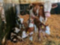 Vierlingsmama.jpg