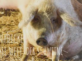 Entdecke die Welt der Schweine ❤️
