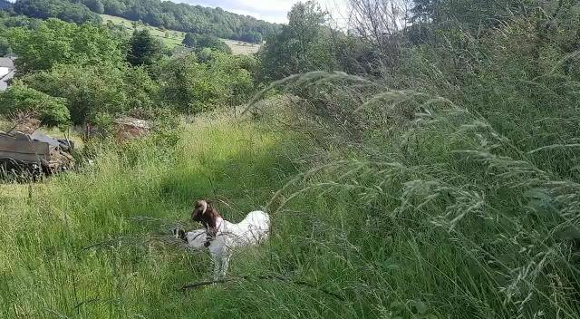 HEIDI und MAX versteckt im hohen Gras ❤️