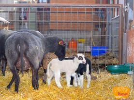 Mutterglück im Schafstall ❤️