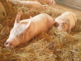 Juno und Paul - gemeinsam gegen Tierversuche ❤️