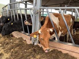3 abgemagerte Kühe und ihre Kinder brauchen dringend Hilfe! ❤️