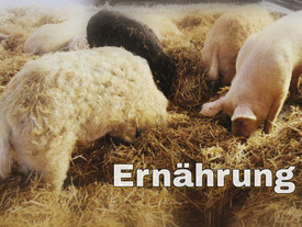 Was essen eigentlich unsere Schweine? Hier ist die Antwort ❤️