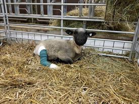 OTTILIE wurde operiert