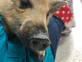 Unserem kleinen Sorgenschweinchen geht es besser