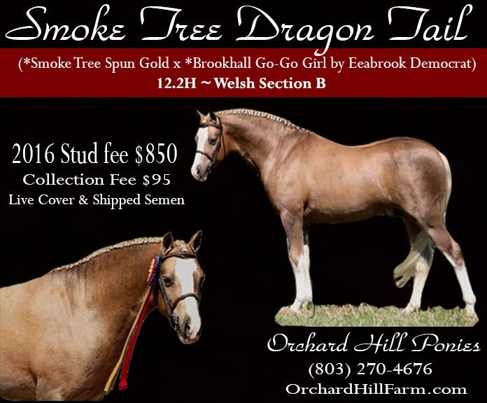 Smoke Tree Dragon Tail