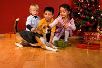 trained dogs for sale - trained family dogs for sale