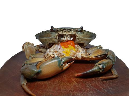 Female Mud Crab / Ketam Betina (1kg)