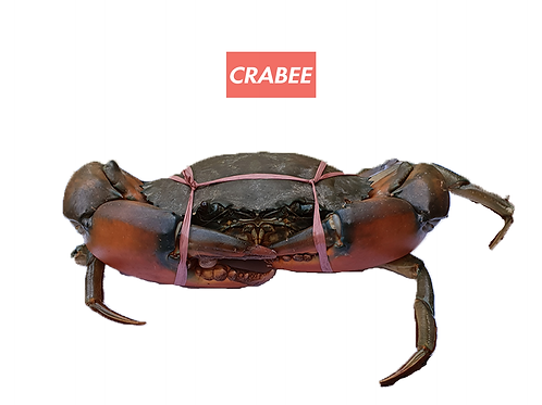 Giga Mud Crab (2 pieces)
