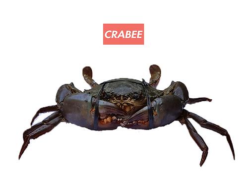 Mega Mud Crab (2 pieces)