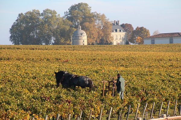 Chateau Latour - Horses at Work