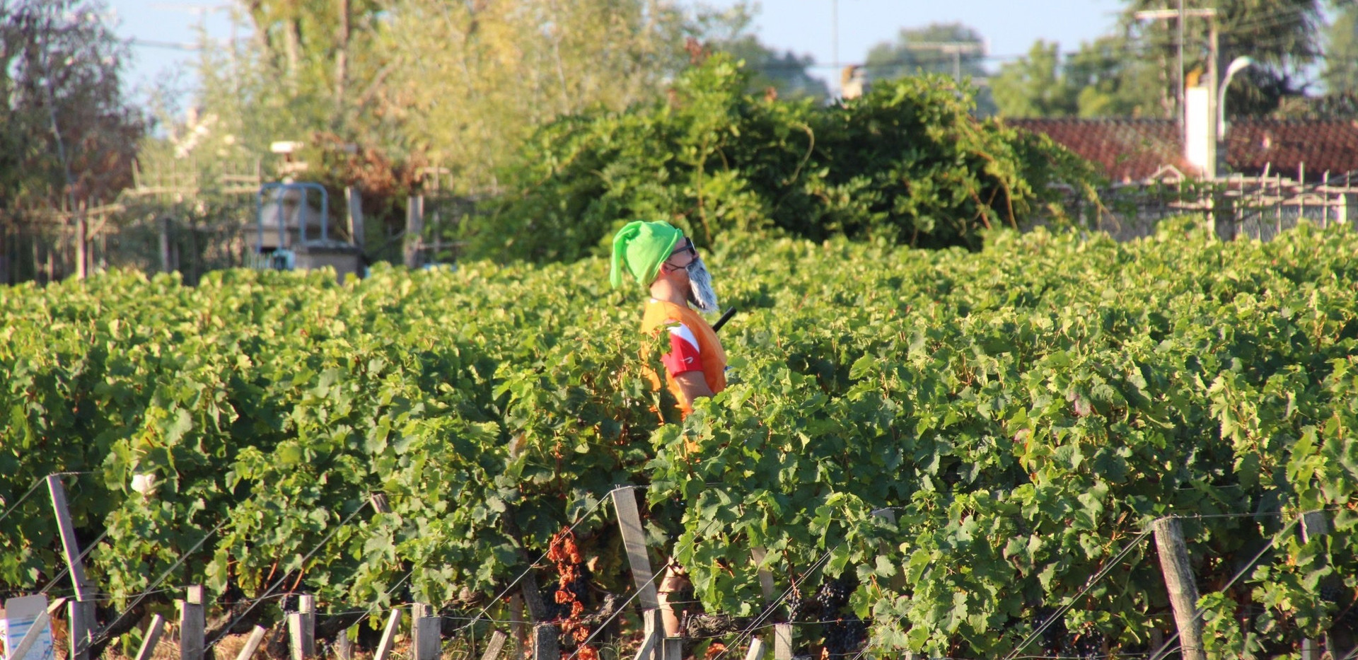 Snow White's Friend in the Vines - Marathon du Medoc