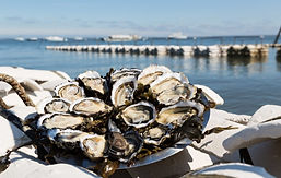 Cap Ferret Oysters