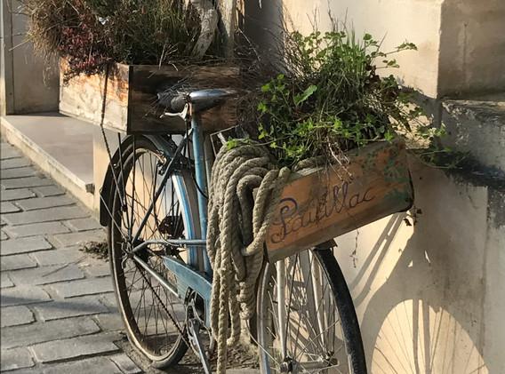 Flower Arrangement - Pauillac Bicycle