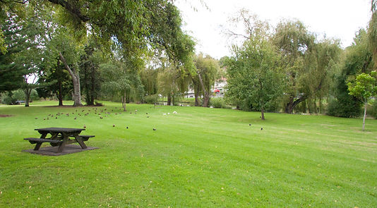 Picture of Portland Reserve, Remuera