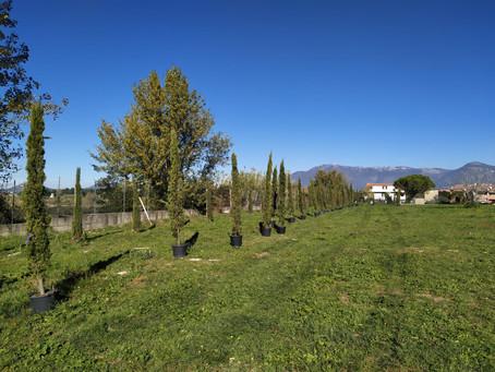 Guidonia Montecelio: Piantati 62 nuovi alberi al Parco di Valle Pilella