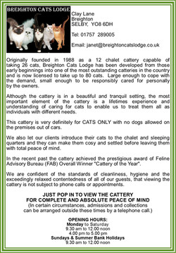 Breighton Cats Lodge