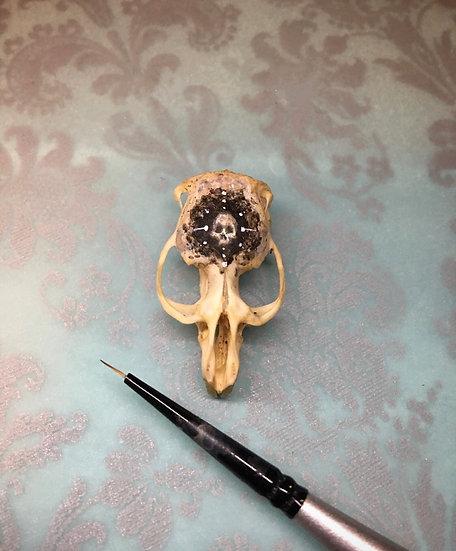 Skull on Rat skull