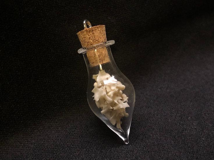Small vertebra in glass bottle