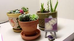 Plant Creations