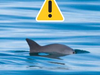 Posicionamiento de WWF sobre la vaquita marina