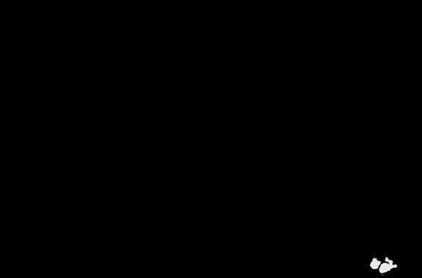 leeuw-header transparant.png