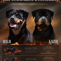 Masai / Kaizer
