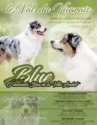 blue-sans-fond-vert.png