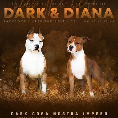 dark-diana.png