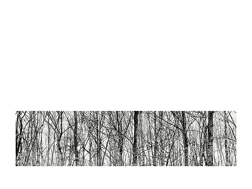 LIMITED EDITION Greeting Card: Tree Lines by Amanda Russo Rubman